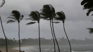 Palm trees swaying in wind
