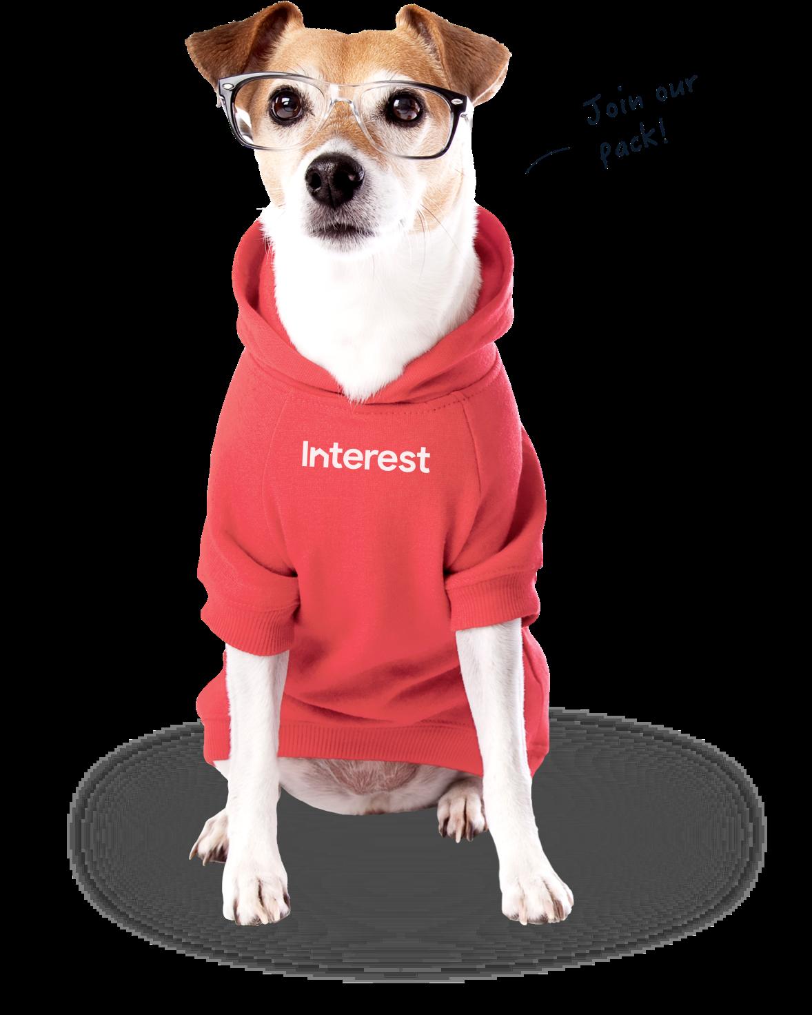 Dog wearing interest hoodie